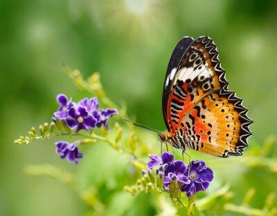 Fototapet Fjäril på en lila blomma
