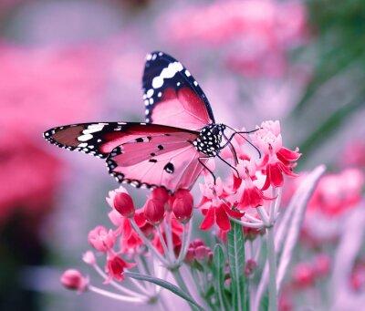 Fototapet Fjäril på orange blomma