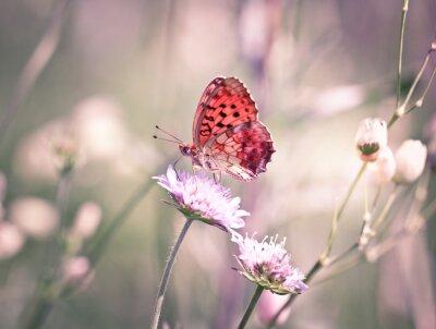 Fototapet Fjäril på vild