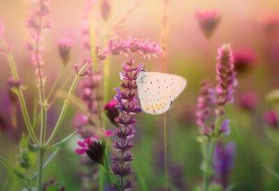 Fototapet Fjäril på vild blomma