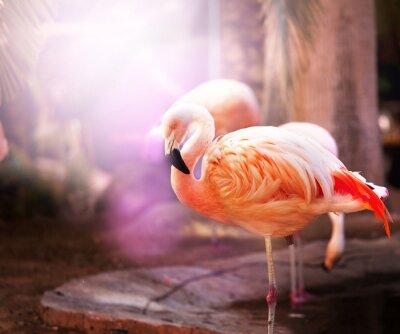 Fototapet flamingo