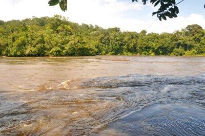 Fototapet Fleuve d'amazonie