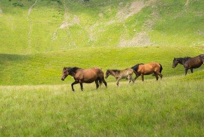 Fototapet Flock hästar promenader längs en berg äng