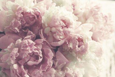 Fototapet Fluffy rosa peonies blommar bakgrund