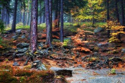 Fototapet Forest undervegetation på bergssluttning