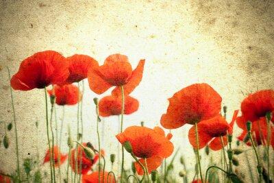 Fototapet Foto av en vallmo blommor
