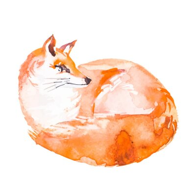 Fototapet Fox isolerad på vit bakgrund. Vattenfärg. .