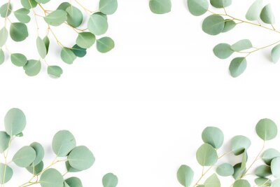 Fototapet frame of green branches, eucalyptus leaves on a white background. flat layout, top view