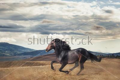 Fototapet Galloping horse