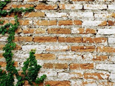 Fototapet Gammal tegelvägg med kryp