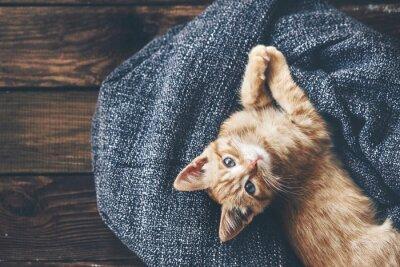 Fototapet Gigner kattunge