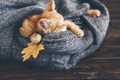 Fototapet Gigner kattunge sovande