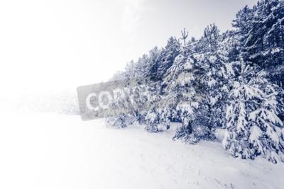 Fototapet Gran dimmigt skog täckt av snö i vinterlandskap