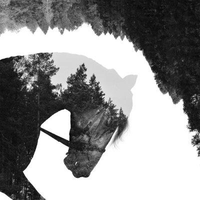 Fototapet Gran skog inne hästen i konst, multiexposition
