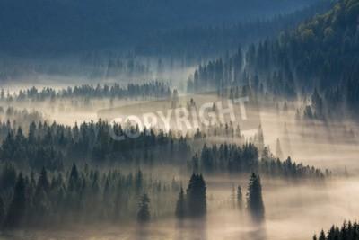 Fototapet granar på en äng ner viljan att barrskog i dimma berg