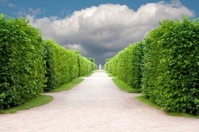 Fototapet gränd i parken med exakt topiary träd