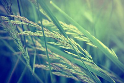 Fototapet gräs