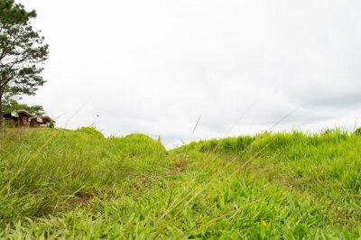Fototapet gräs moutain
