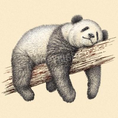 Fototapet gravera isolerade panda illustration skiss. linjär art