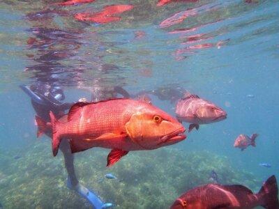 Fototapet Great Barrier Reef Fish