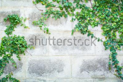 Fototapet Green Creeper Plant på en vit vägg vacker bakgrund