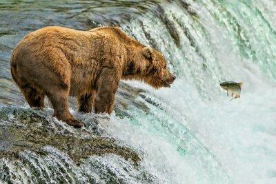 Fototapet Grizzly Bear Katmai National Park Alaska
