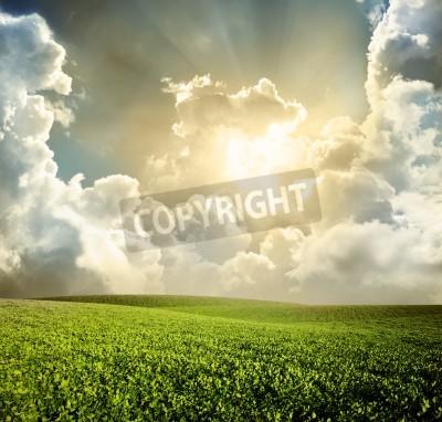 Fototapet Grön äng under blå himmel med moln