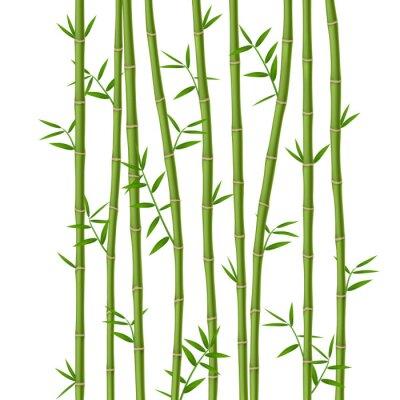 Fototapet Grön bambu med blad isolerad på vit bakgrund