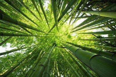 Fototapet Grön bambu natur bakgrunder