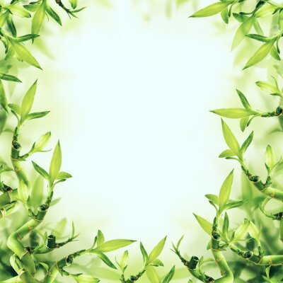 Fototapet Grön bambubakgrund. Spa och hälsosam