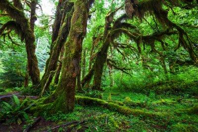 Fototapet grön skog