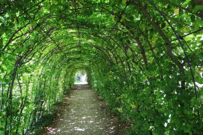 Fototapet Grön tunnel i trädgården