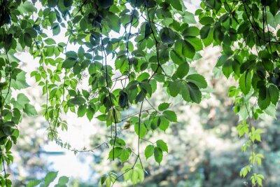Fototapet gröna blad bakgrund