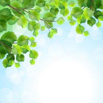 Fototapet Gröna blad trädgrenar vektor bakgrund