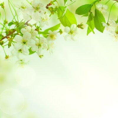 Fototapet Gröna blad, vacker natur bakgrund
