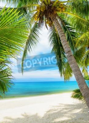 Fototapet Gröna träd på en vit sandstrand