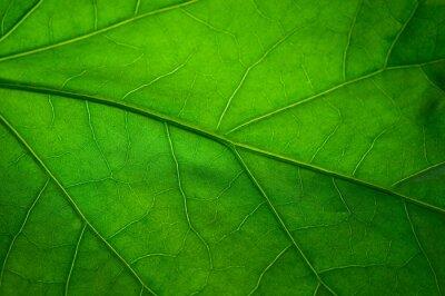 Fototapet Grönt löv