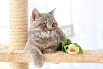 Fototapet Gullig katt som ligger på klosparare med tulpan i ljust rum