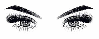 Fototapet Handdragen kvinnas sexiga makeup look med perfekt perfekt formade ögonbryn och extra fulla ögonfransar. Idé för visitkort, typografi vektor. Perfekt salongutseende