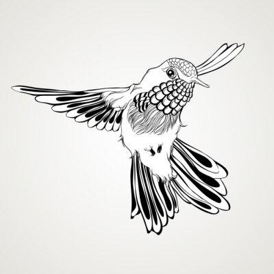 Fototapet Handritad flygande surrfågel vintagestil.
