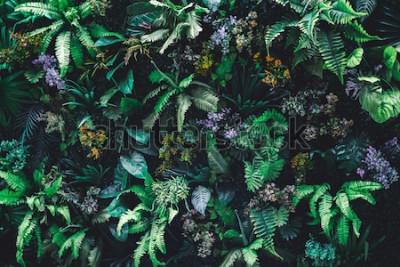 Fototapet Härlig naturbakgrund av den vertikala trädgården med det tropiska gröna bladet