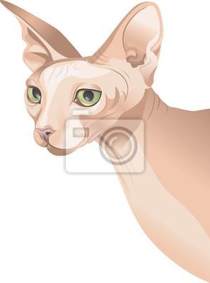 hårlös katt