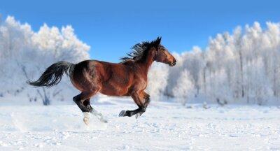Fototapet Häst