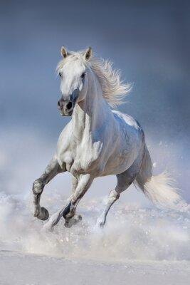 Fototapet Häst i snö
