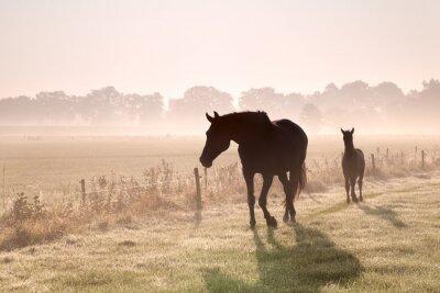 Fototapet häst och föl silhuetter i dimma