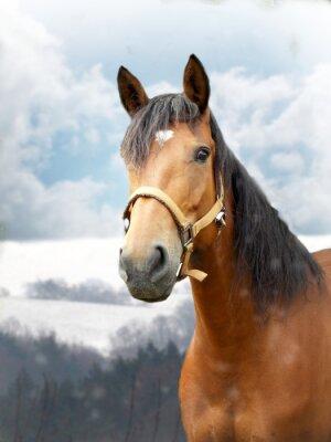 Fototapet Häst på vintern