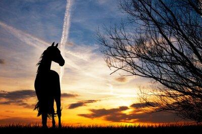 Fototapet häst silhuett på solnedgången