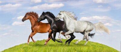 Fototapet Hästar som körs galopp på grönbete mot vacker himmel