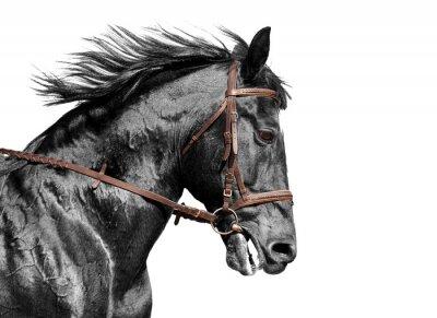 Fototapet Häststående i svart och vitt i den bruna träns