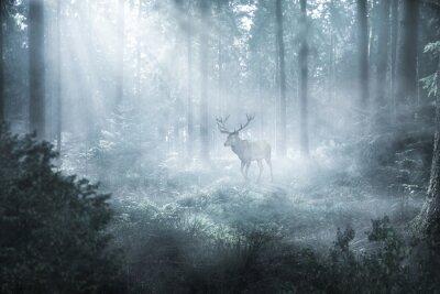 Fototapet Hirsch im nebeligen Wald